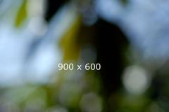 01_600_0006_a