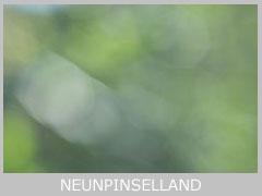 icon-neunpinselland-mt