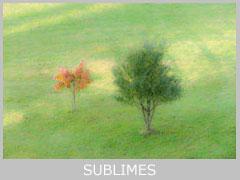 icon-sublimes-mt