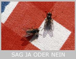 sag-ja-oder-nein-icon2-mt